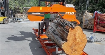 LT10 cuts Spanish cypress for flamenco guitars in Spain
