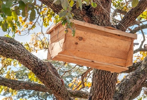 One LT15 produces timber for 50,000 beehives in Zambia