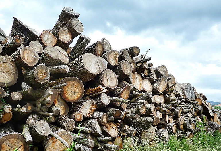 Logs in Italy for firewood and sawmilling