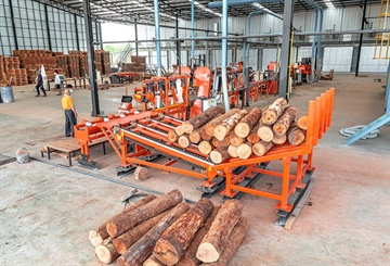 New Sawmill Company in Thailand Focuses on ROI